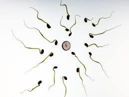 HOW TO INCREASE SPERM COUNT AND VOLUME