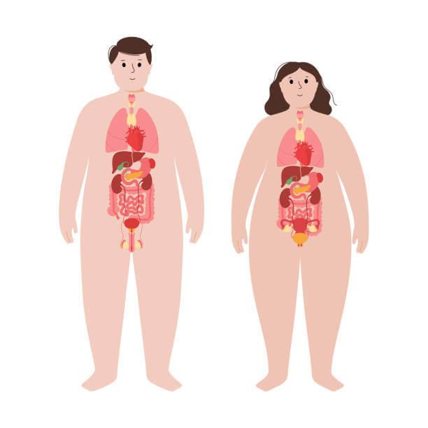 Role Of Obesity In Male Infertility