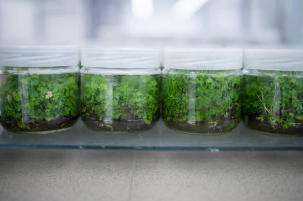 Herbs For Fertility In Nigeria